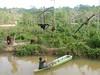 Orangutans being fed (Animal People Forum) Tags: rescue project indonesia wildlife palm borneo oil orangutan ape primate greatape rehabilitation palmoil wildliferehabilitation samboja lestari