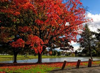 pond in Autumn  (Explored)