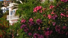 on the hotel grounds IMG_1193 (mygreecetravelblog) Tags: island hotel greece greekislands andros cyclades batsi cycladesislands androsgreece androsisland batsiandros greekislandhotel aneroussabeachhotel batsivillage aneroussahotelandros