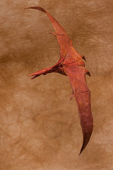 Redpath Pteranodon - Robert J. Lang (P. Colman) Tags: paper origami pterosaur pteranodon