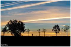 Perfils a contrallum (Rafel Miro) Tags: alba amanacer arbol arboles arbre arbres autumn backlit backlight canoriol catalonia catalunya contrallum contraluz landscape natura naturaleza nature paisaje paisatge rubi shape shapes silueta siluetas siluetes sortidadelsol sunset tardor tree trees otoño