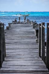 IMG_0333 (DaveGifford) Tags: mexico islamujeres birds jetty seagull casabonita quintanaroo