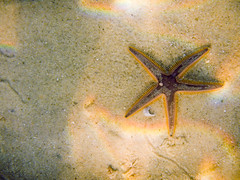 Estrela-do-mar (Johnny Photofucker) Tags: estreladomar búzios rj underwater mergulho dive diving starfish stelladimare mar mare sea lightroom nikon aw100