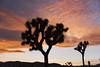 Sunset in Lost Horse Valley (Joshua Tree National Park) Tags: joshuatree nationalpark california desert sunset clouds losthorsevalley boulders silhouette