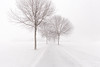 the winter path (Marc McDermott) Tags: trees snowfall winter minimalism falling nature beautiful sublime clean quiet path vanishing point bare ontario canada simple wow