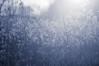 blue monday (Smo_Q - As long as you remember me, I'll never ..) Tags: poland grass sadness sun ♥ ☾