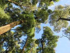IMG_2093 (borneirana) Tags: bosque forest bäume ärbol tree green up sky