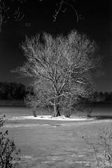 1K photo - Ilford Delta 400 (magnus.joensson) Tags: sweden swedish winter skåne trelleborg tree frozen lake monochrome blackandwhite nikon fm3a voigtländer 58mm sl ilford delta 400 stand develop 1100 adox adonal epson v800 scan 1k