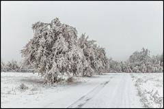 icy trees (Der Zeit die Augenblicke stehlen) Tags: bw bäume deutschland eos700d eichsfeld hth56 landscape landschaft thomashesse thüringen winter contrast monochrom sw shadows snow trees way