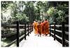 Ta Prohm (tote_nos) Tags: cambogia cambodia canon canon5d reflex viaggio trip oriente honeymoon vietnamcambodia 2016 october backpacking backpack backpacker east monk orange pray divine god temple ta prohm taprohm