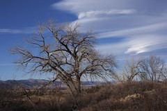Wicked Winds (Jeff Mitton) Tags: cottonwoodtree lenticularclouds boulder colorado mountains wondersofnature abigfave