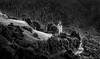 Mont,Val d'Aran (sampler1977) Tags: landscape blackandwhite blancoynegro paisaje pirineos pyrenees valle de aran montaña mountain montagne mountains noiretblanc