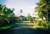 Island Life (Filmosaurus) Tags: street alotau milnebay papuanewguinea coconuts melanesia islandlife 2013 analog analogue 35mm olympusxa xa fujisuperia400xtra filmisnotdead
