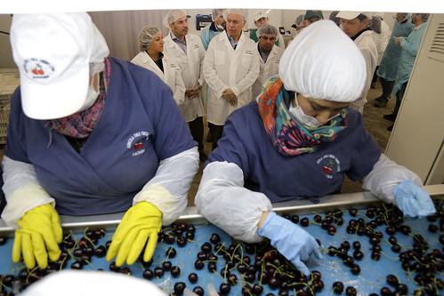 Ministro de Agricultura valora el potencial exportador de cerezas que presenta la comuna de Chile Chico