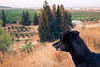 Enjoy the view (BrianMills) Tags: dogs view nature outdoor contrast split splittone