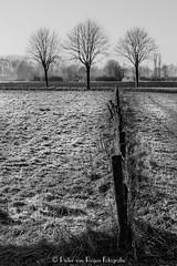 Snowy field HDR (PvRFotografie) Tags: holland nederland nature natuur natural zwartwit blackandwhite blackwhite monochrome tree trees bomen boom landscape landschap fujifinepixx20 fujix20 rotterdam rotterdamzuid rotterdamcharlois