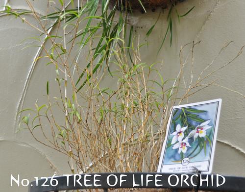 no.126treeoflifeorchid