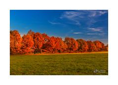Herbstfarben (@JoHo) Tags: landscape landschaft herbst autum photoshopcc lightroomcc germany deutsch brandenburg teltow fläming herbstfarben herbstfärbung farben color