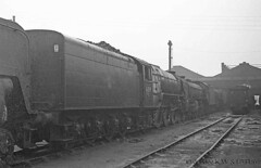 60s steam 22-09-63 60119 Doncaster MPD (dubdee) Tags: 60ssteam doncastermpd 36a britishrailways doncaster railway lner a1 462 60119