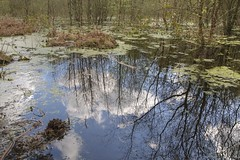 Reflected Sky (Tony Shertila) Tags: 20160423142816 delamere england gbr geo:lat=5323517062 geo:lon=266718864 geotagged norley unitedkingdom outdoor europe britain cheshire mere water lake reflection tree bush sky clouds