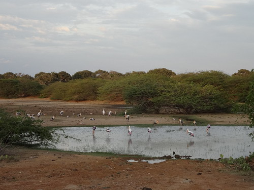 Bundala National Park