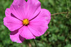 IMG_0182 (inQntrol_life) Tags: flower nature wildlife cat rose colour canon canoneos600d 600d nikon nightlife streetphotography street fire bodensee lakeconstance germany macro danbo toy water waterdrop