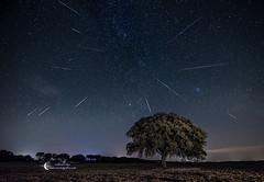 Perseids (Gabriel Glez.) Tags: nightphotography stars nightscape lorenzo shootingstars lagrimas holmoak encina shootingstar perseidas perseids  lagrimasdesanlorenzo  gabrielglez noctografia