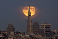 Presidio - 082915 - 14 - Moonrise Behind the Transamerica Pyramid (Stan-the-Rocker) Tags: sanfrancisco sony financialdistrict presidio transamericapyramid nex sal55300 stantherocker