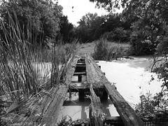 Caution Bridge Unsafe (Gary Helm) Tags: christmas camera blackandwhite usa nature canon outside us unsafe florida outdoor walk wildlife hike powershot photograph caution grayscale bridg tosohatcheewildlifemanagementarea sx60hs ghelm4747 garyhelm