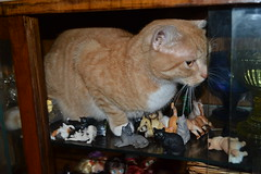 I expanded my collection of miniature cats (pe.kalina) Tags: cats scale animal cat miniature figurines figure planet schleich