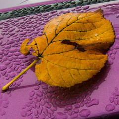 """Yellow On Purple • <a style=""""font-size:0.8em;"""" href=""""http://www.flickr.com/photos/53908815@N02/21984686903/"""" target=""""_blank"""">View on Flickr</a>"""