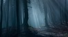 "la nebbia ed ... il sole ("" paolo ammannati "") Tags: wood tree nature fog alberi forest raw natura ligth 1001nights nebbia luce bosco 1001 camaldoli foreste paoloammannati forestecasentinesi 1001nightsmagiccity"