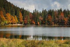 Indian Summer am Feldsee im Schwarzwald (Stefan Giese) Tags: orange rot colors forest canon herbst natur braun landschaft schwarzwald indiansummer autmn herbstfarben feldsee 70d