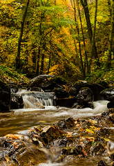 the Inchewan burn runs past my house. This is a portrait shot from in the water (portrait) (grahamrobb888) Tags: trees water forest highlands stream perthshire inchewanburn nikond5100 27thoctoberstreeam