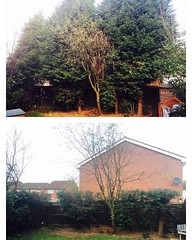 "Very heavy conifer reductions this morning due to light issues affecting several properties #wardenstreecare <a style=""margin-left:10px; font-size:0.8em;"" href=""http://www.flickr.com/photos/137723818@N08/22755426120/"" target=""_blank"">@flickr</a>"