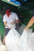 69 (UGA College of Ag & Environmental Sciences - OCCS) Tags: cotton cottonpicker uga tifton philliproberts class