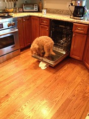 manny-makes-an-adorable-quality-inspector-for-the-dishwasher--manny-is-dazzles-little-boy_17302032496_o