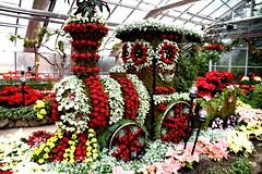 Christmas Flower Show, Centennial Park Conservatory, Toronto, ON (Snuffy) Tags: christmasflowershow etobicoke toronto ontario canada christmas centennialparkconservatory level1photographyforrecreation
