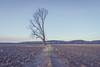 Still Here (Heath Cajandig) Tags: missouri river bottom fields farm famerland half tree split alive winter desolate vintage no people