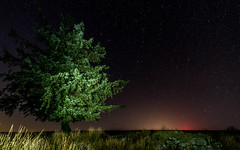 The Tree (Rich Walker75) Tags: night nature nightshot nightsky navy nighttime tree trees lightpainting stars devon landscape sky astrophotography canon eos100d efs1585mmisusm