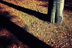 All tomorrow colors (igo.rs) Tags: autumn leaves fall tree sunset yellow light forest orange beautiful leaf shadow