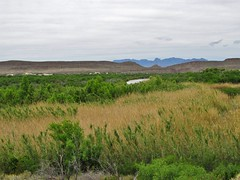Big Bend National Park (Jasperdo) Tags: bigbendnationalpark bigbend nationalpark nationalparkservice nps texas riograndevillagenaturetrail naturetrail landscape scenery riogranderiver