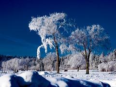 P1250134-Edit.jpg (ChanHawkins) Tags: olympusmarkiitesting frost