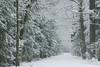 Winter (nettisrb) Tags: winter winterlandschaft winterscene waldweg allee path bäume tree trees weg wald wood forrest nebel licht snow natur naturerlebnis nature