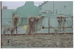 Image4 (dmacfoto) Tags: 35mm fuji superia fujica