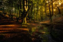 Last lights in the forest (pajavi69) Tags: hayedodeotzarreta gorbea atardecer luz bosque arbolarboles sombras mistico sunset light forest treetrees shades mystical nikon d7100 vizcaya