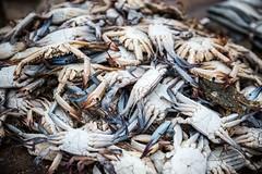 Crabs (Wookkie) Tags: ifttt 500px asia fish food negombo sri lanka