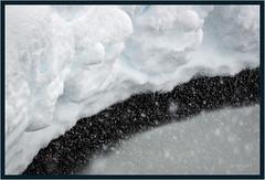ItSnow Illusion (jk walser) Tags: d800e jkwalser mtrainiernationalpark paradise paradisecreek snowshoe wa winter abstract snow
