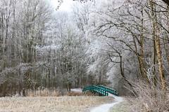 Winter / Hiver (tribsa2) Tags: nederlandvandaag marculescueugendreamsoflightportal winter hiver bos forest foret
