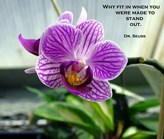 Why? (Sandy*S) Tags: ansh77 challenge orchid purple drseuss